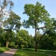 gatchina-dvorcovyj-park-07
