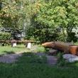elets-gorodskoj-park-17