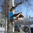 arhangelsk-nabereznaya-032012-19