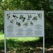 ekaterinburg-haritonovskij-park-12