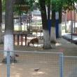 lipetsk-zoo-07