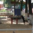 lipetsk-zoo-08