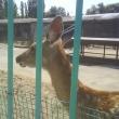 lipetsk-zoo-14