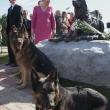moskva-otkrytie-pamyatnika-frontovoj-sobake-04