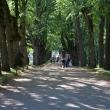 pavlovsk-pavlovskij-park-04