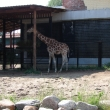 spb-zoo-11