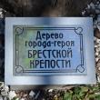 tuapse-skver-gorodov-geroev-25